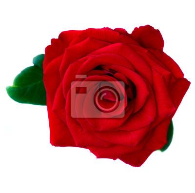 Постер Розы Красная РозаРозы<br>Постер на холсте или бумаге. Любого нужного вам размера. В раме или без. Подвес в комплекте. Трехслойная надежная упаковка. Доставим в любую точку России. Вам осталось только повесить картину на стену!<br>