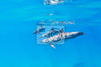 Постер Дельфины