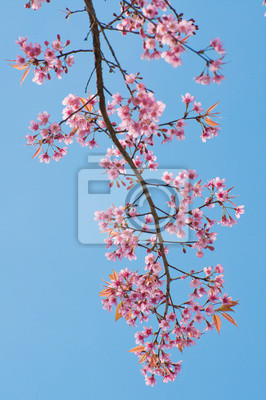 Постер Сакура Розовый цветок цветение веснойСакура<br>Постер на холсте или бумаге. Любого нужного вам размера. В раме или без. Подвес в комплекте. Трехслойная надежная упаковка. Доставим в любую точку России. Вам осталось только повесить картину на стену!<br>