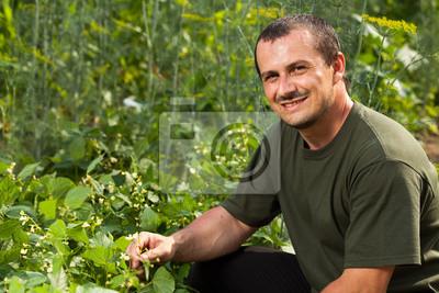 Фермер вблизи поля широкие, бобовые растения, 30x20 см, на бумагеСадоводство<br>Постер на холсте или бумаге. Любого нужного вам размера. В раме или без. Подвес в комплекте. Трехслойная надежная упаковка. Доставим в любую точку России. Вам осталось только повесить картину на стену!<br>