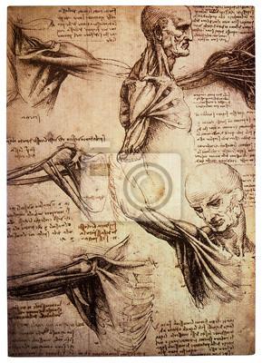 Постер Медицина Старый anamtomical рисунков Леонардо да ВинчиМедицина<br>Постер на холсте или бумаге. Любого нужного вам размера. В раме или без. Подвес в комплекте. Трехслойная надежная упаковка. Доставим в любую точку России. Вам осталось только повесить картину на стену!<br>