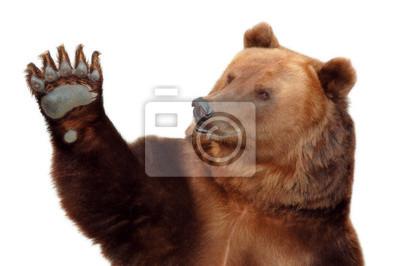 Медведь приветствует вас и машет лапой, 30x20 см, на бумагеМедведи<br>Постер на холсте или бумаге. Любого нужного вам размера. В раме или без. Подвес в комплекте. Трехслойная надежная упаковка. Доставим в любую точку России. Вам осталось только повесить картину на стену!<br>