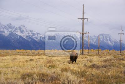 Одного быка bison, 30x20 см, на бумагеЗубры<br>Постер на холсте или бумаге. Любого нужного вам размера. В раме или без. Подвес в комплекте. Трехслойная надежная упаковка. Доставим в любую точку России. Вам осталось только повесить картину на стену!<br>