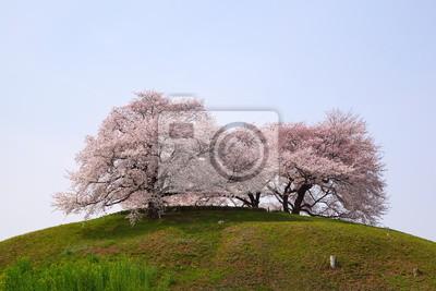 Постер Сакура Вишневое дерево на холмеСакура<br>Постер на холсте или бумаге. Любого нужного вам размера. В раме или без. Подвес в комплекте. Трехслойная надежная упаковка. Доставим в любую точку России. Вам осталось только повесить картину на стену!<br>