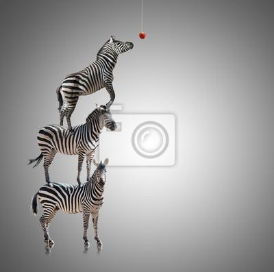 Стек Zebra Идущие В Пищу Apple, 20x20 см, на бумагеЗебры<br>Постер на холсте или бумаге. Любого нужного вам размера. В раме или без. Подвес в комплекте. Трехслойная надежная упаковка. Доставим в любую точку России. Вам осталось только повесить картину на стену!<br>