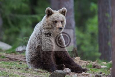 Постер Словакия Бурый медведь, в лес ТьягуСловакия<br>Постер на холсте или бумаге. Любого нужного вам размера. В раме или без. Подвес в комплекте. Трехслойная надежная упаковка. Доставим в любую точку России. Вам осталось только повесить картину на стену!<br>