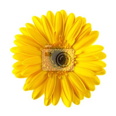 Постер Ромашки Желтая ромашка цветок изолированныеРомашки<br>Постер на холсте или бумаге. Любого нужного вам размера. В раме или без. Подвес в комплекте. Трехслойная надежная упаковка. Доставим в любую точку России. Вам осталось только повесить картину на стену!<br>