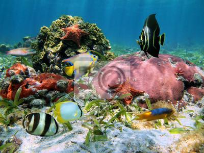 Постер Подводный мир Морские звезды, кораллы, 27x20 см, на бумагеМорские звезды<br>Постер на холсте или бумаге. Любого нужного вам размера. В раме или без. Подвес в комплекте. Трехслойная надежная упаковка. Доставим в любую точку России. Вам осталось только повесить картину на стену!<br>