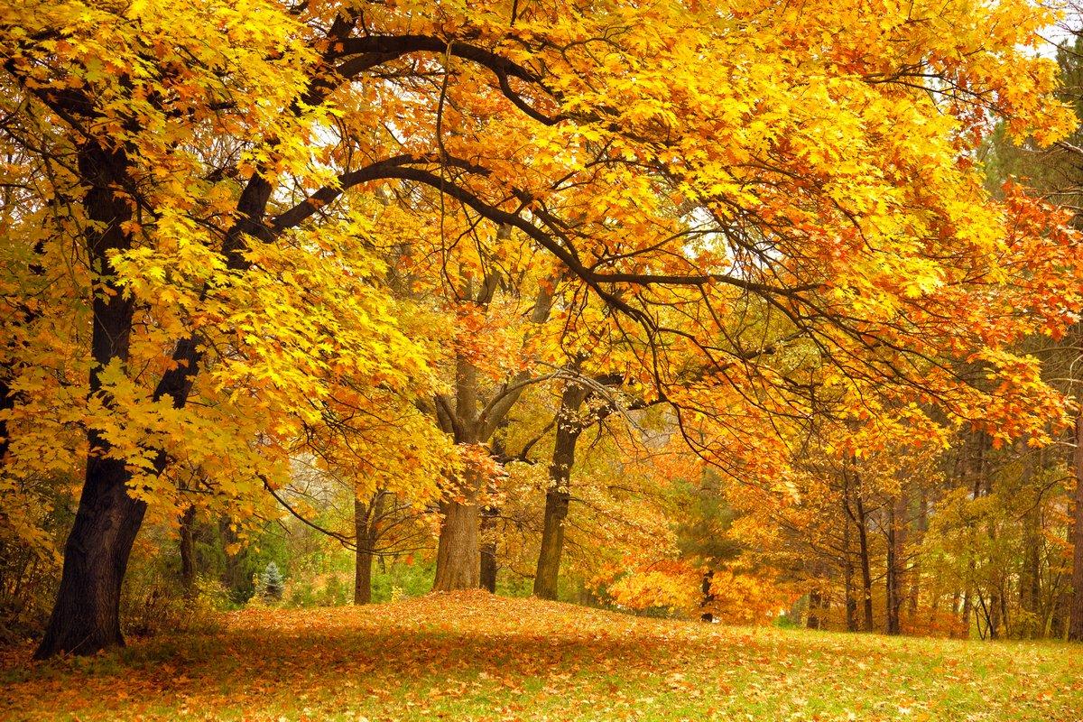 Постер Осень Осень / Золото Деревья в паркеОсень<br>Постер на холсте или бумаге. Любого нужного вам размера. В раме или без. Подвес в комплекте. Трехслойная надежная упаковка. Доставим в любую точку России. Вам осталось только повесить картину на стену!<br>