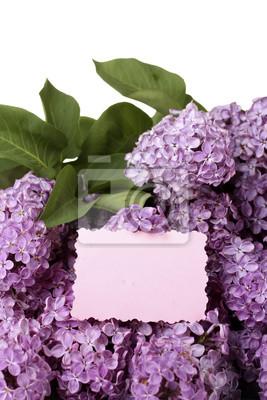 Постер Сирень Красивые цветы сирени, изолированных на белый.Сирень<br>Постер на холсте или бумаге. Любого нужного вам размера. В раме или без. Подвес в комплекте. Трехслойная надежная упаковка. Доставим в любую точку России. Вам осталось только повесить картину на стену!<br>