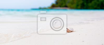 Постер Крабы Краб-отшельник, наблюдая за океаном, на белом пляже на МальдивахКрабы<br>Постер на холсте или бумаге. Любого нужного вам размера. В раме или без. Подвес в комплекте. Трехслойная надежная упаковка. Доставим в любую точку России. Вам осталось только повесить картину на стену!<br>