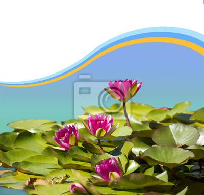 Постер Лилии Розовый waterlilies в пруд .Flowers фонового изображения для дизайнаЛилии<br>Постер на холсте или бумаге. Любого нужного вам размера. В раме или без. Подвес в комплекте. Трехслойная надежная упаковка. Доставим в любую точку России. Вам осталось только повесить картину на стену!<br>