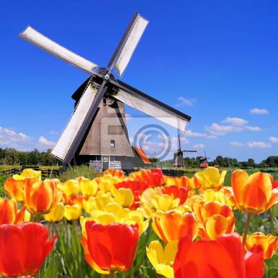 Постер Голландия Традиционные голландские ветряки, с яркими тюльпанамиГолландия<br>Постер на холсте или бумаге. Любого нужного вам размера. В раме или без. Подвес в комплекте. Трехслойная надежная упаковка. Доставим в любую точку России. Вам осталось только повесить картину на стену!<br>