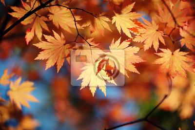 Постер Осень Осенний кленовый листОсень<br>Постер на холсте или бумаге. Любого нужного вам размера. В раме или без. Подвес в комплекте. Трехслойная надежная упаковка. Доставим в любую точку России. Вам осталось только повесить картину на стену!<br>