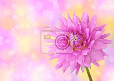 Постер Георгины Розовый цветок георгинаГеоргины<br>Постер на холсте или бумаге. Любого нужного вам размера. В раме или без. Подвес в комплекте. Трехслойная надежная упаковка. Доставим в любую точку России. Вам осталось только повесить картину на стену!<br>