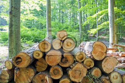 Деревья в лесу, 30x20 см, на бумагеДеревообрабатывающая промышленность<br>Постер на холсте или бумаге. Любого нужного вам размера. В раме или без. Подвес в комплекте. Трехслойная надежная упаковка. Доставим в любую точку России. Вам осталось только повесить картину на стену!<br>