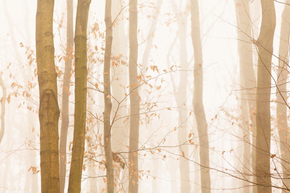 Постер Осень Деревья быстро исчезают в ярко-желтый туманОсень<br>Постер на холсте или бумаге. Любого нужного вам размера. В раме или без. Подвес в комплекте. Трехслойная надежная упаковка. Доставим в любую точку России. Вам осталось только повесить картину на стену!<br>