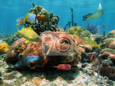 Постер Куба Неглубокие коралловых рифовКуба<br>Постер на холсте или бумаге. Любого нужного вам размера. В раме или без. Подвес в комплекте. Трехслойная надежная упаковка. Доставим в любую точку России. Вам осталось только повесить картину на стену!<br>