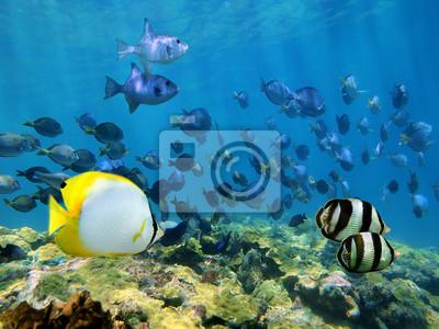Постер Подводный мир Мелководье тропических рыб в коралловых рифов,, 27x20 см, на бумагеРыбы<br>Постер на холсте или бумаге. Любого нужного вам размера. В раме или без. Подвес в комплекте. Трехслойная надежная упаковка. Доставим в любую точку России. Вам осталось только повесить картину на стену!<br>