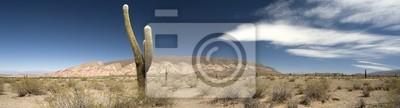 Постер Кактусы Пустынные кактусы, АргентинаКактусы<br>Постер на холсте или бумаге. Любого нужного вам размера. В раме или без. Подвес в комплекте. Трехслойная надежная упаковка. Доставим в любую точку России. Вам осталось только повесить картину на стену!<br>