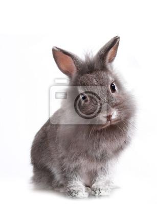 Молодые Очаровательные Маленькие Кролик, 20x26 см, на бумагеЗайцы<br>Постер на холсте или бумаге. Любого нужного вам размера. В раме или без. Подвес в комплекте. Трехслойная надежная упаковка. Доставим в любую точку России. Вам осталось только повесить картину на стену!<br>