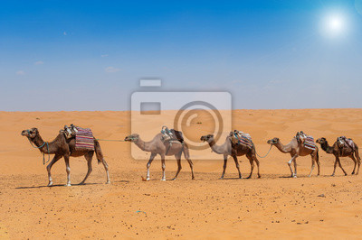Постер Африканский пейзаж Верблюд в СахареАфриканский пейзаж<br>Постер на холсте или бумаге. Любого нужного вам размера. В раме или без. Подвес в комплекте. Трехслойная надежная упаковка. Доставим в любую точку России. Вам осталось только повесить картину на стену!<br>