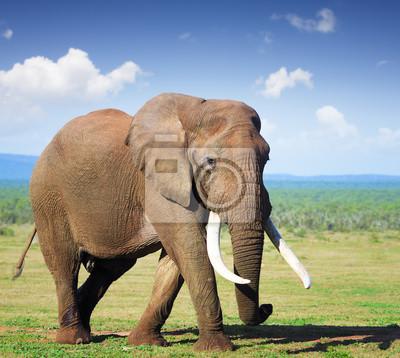 Постер Африканский пейзаж СлонАфриканский пейзаж<br>Постер на холсте или бумаге. Любого нужного вам размера. В раме или без. Подвес в комплекте. Трехслойная надежная упаковка. Доставим в любую точку России. Вам осталось только повесить картину на стену!<br>