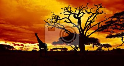 Постер Животные Африканская ночь, 38x20 см, на бумагеЖирафы<br>Постер на холсте или бумаге. Любого нужного вам размера. В раме или без. Подвес в комплекте. Трехслойная надежная упаковка. Доставим в любую точку России. Вам осталось только повесить картину на стену!<br>