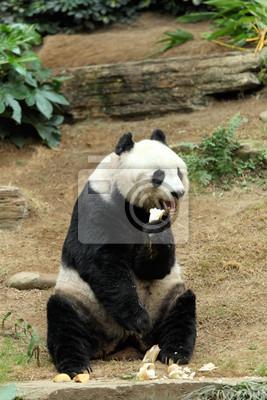 Гигантская панда, 20x30 см, на бумагеПанда<br>Постер на холсте или бумаге. Любого нужного вам размера. В раме или без. Подвес в комплекте. Трехслойная надежная упаковка. Доставим в любую точку России. Вам осталось только повесить картину на стену!<br>