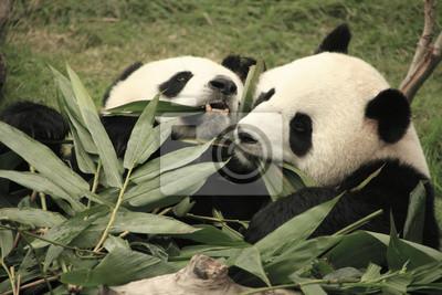 Гигантская панда медведи едят бамбука, Китай, 30x20 см, на бумагеПанда<br>Постер на холсте или бумаге. Любого нужного вам размера. В раме или без. Подвес в комплекте. Трехслойная надежная упаковка. Доставим в любую точку России. Вам осталось только повесить картину на стену!<br>