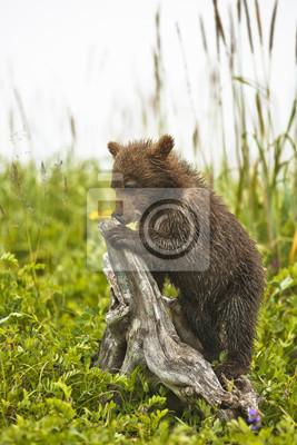 Постер Животные Медведь на дереве, 20x30 см, на бумагеМедведи<br>Постер на холсте или бумаге. Любого нужного вам размера. В раме или без. Подвес в комплекте. Трехслойная надежная упаковка. Доставим в любую точку России. Вам осталось только повесить картину на стену!<br>