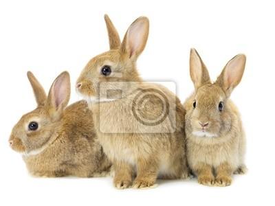 Три коричневых кроликов, 27x20 см, на бумагеКролики<br>Постер на холсте или бумаге. Любого нужного вам размера. В раме или без. Подвес в комплекте. Трехслойная надежная упаковка. Доставим в любую точку России. Вам осталось только повесить картину на стену!<br>