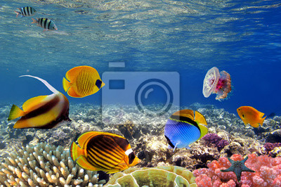 Подводная жизнь жесткого коралловых рифов, Красное Море, Египет, 30x20 см, на бумагеЕгипет<br>Постер на холсте или бумаге. Любого нужного вам размера. В раме или без. Подвес в комплекте. Трехслойная надежная упаковка. Доставим в любую точку России. Вам осталось только повесить картину на стену!<br>