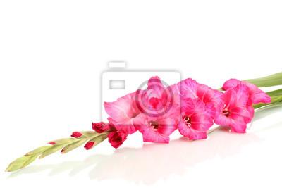 Постер Цветы Красивые розовые гладиолусы, изолированных на белом, 30x20 см, на бумагеГладиолусы<br>Постер на холсте или бумаге. Любого нужного вам размера. В раме или без. Подвес в комплекте. Трехслойная надежная упаковка. Доставим в любую точку России. Вам осталось только повесить картину на стену!<br>