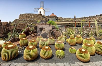 Постер Кактусы Вид кактуса сад в Guatiza, Lanzarote,Кактусы<br>Постер на холсте или бумаге. Любого нужного вам размера. В раме или без. Подвес в комплекте. Трехслойная надежная упаковка. Доставим в любую точку России. Вам осталось только повесить картину на стену!<br>
