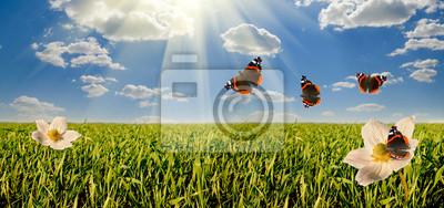 Постер Пейзаж равнинный Цветы на поляне панорамаПейзаж равнинный<br>Постер на холсте или бумаге. Любого нужного вам размера. В раме или без. Подвес в комплекте. Трехслойная надежная упаковка. Доставим в любую точку России. Вам осталось только повесить картину на стену!<br>
