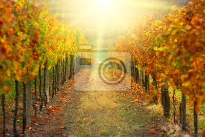 Постер Испания Осенью виноградникИспания<br>Постер на холсте или бумаге. Любого нужного вам размера. В раме или без. Подвес в комплекте. Трехслойная надежная упаковка. Доставим в любую точку России. Вам осталось только повесить картину на стену!<br>