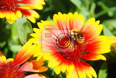 Постер Эхинацея Bumble-bee на цветок,Эхинацея<br>Постер на холсте или бумаге. Любого нужного вам размера. В раме или без. Подвес в комплекте. Трехслойная надежная упаковка. Доставим в любую точку России. Вам осталось только повесить картину на стену!<br>
