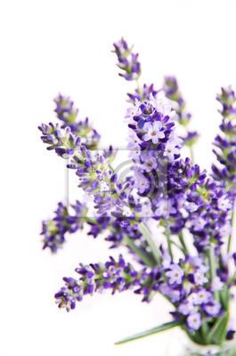 Постер Лаванда LavendelЛаванда<br>Постер на холсте или бумаге. Любого нужного вам размера. В раме или без. Подвес в комплекте. Трехслойная надежная упаковка. Доставим в любую точку России. Вам осталось только повесить картину на стену!<br>
