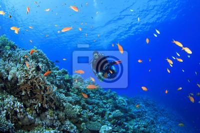 Постер Спорт Scuba Diver исследует коралловый риф, 30x20 см, на бумагеДайвинг<br>Постер на холсте или бумаге. Любого нужного вам размера. В раме или без. Подвес в комплекте. Трехслойная надежная упаковка. Доставим в любую точку России. Вам осталось только повесить картину на стену!<br>