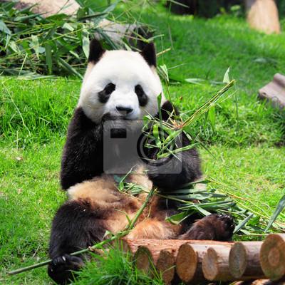 Постер Животные Panda, 20x20 см, на бумагеПанда<br>Постер на холсте или бумаге. Любого нужного вам размера. В раме или без. Подвес в комплекте. Трехслойная надежная упаковка. Доставим в любую точку России. Вам осталось только повесить картину на стену!<br>