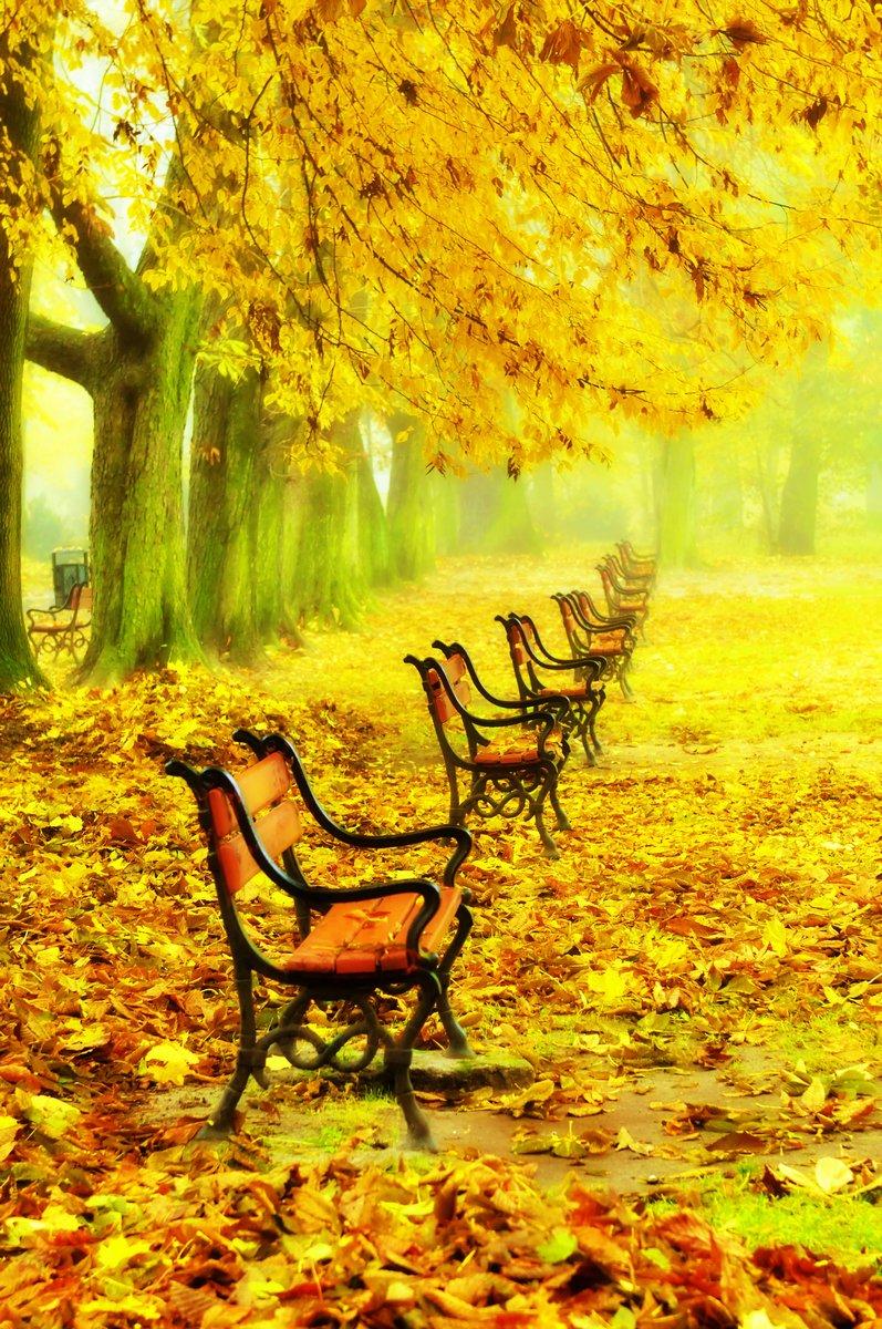 Постер Осень Ряд красных скамеек в паркеОсень<br>Постер на холсте или бумаге. Любого нужного вам размера. В раме или без. Подвес в комплекте. Трехслойная надежная упаковка. Доставим в любую точку России. Вам осталось только повесить картину на стену!<br>