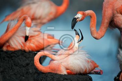 Постер Фламинго Фламинго (Phoenicopterus ruber)Фламинго<br>Постер на холсте или бумаге. Любого нужного вам размера. В раме или без. Подвес в комплекте. Трехслойная надежная упаковка. Доставим в любую точку России. Вам осталось только повесить картину на стену!<br>