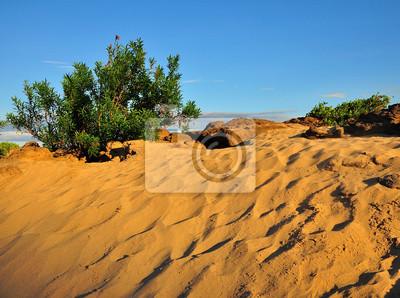 Постер Монголия Небольшие кустарниковых растений в пустынеМонголия<br>Постер на холсте или бумаге. Любого нужного вам размера. В раме или без. Подвес в комплекте. Трехслойная надежная упаковка. Доставим в любую точку России. Вам осталось только повесить картину на стену!<br>