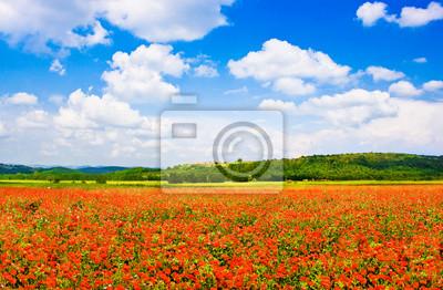 Постер Маки Красный Мак поле, с синим небом в Тоскане, ИталияМаки<br>Постер на холсте или бумаге. Любого нужного вам размера. В раме или без. Подвес в комплекте. Трехслойная надежная упаковка. Доставим в любую точку России. Вам осталось только повесить картину на стену!<br>