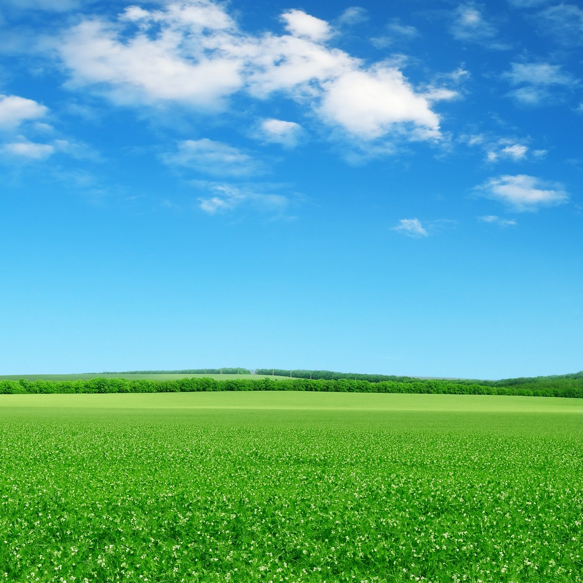 Постер Весна Зеленое поле и голубое небоВесна<br>Постер на холсте или бумаге. Любого нужного вам размера. В раме или без. Подвес в комплекте. Трехслойная надежная упаковка. Доставим в любую точку России. Вам осталось только повесить картину на стену!<br>