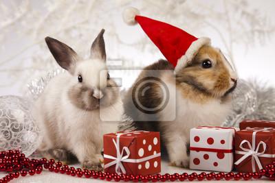 Постер Кролики Кролик, кролик РождествоКролики<br>Постер на холсте или бумаге. Любого нужного вам размера. В раме или без. Подвес в комплекте. Трехслойная надежная упаковка. Доставим в любую точку России. Вам осталось только повесить картину на стену!<br>