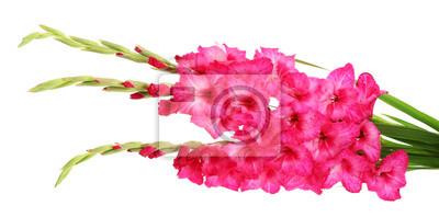 Постер Гладиолусы Красивый букет розовых гладиолусы, изолированных на беломГладиолусы<br>Постер на холсте или бумаге. Любого нужного вам размера. В раме или без. Подвес в комплекте. Трехслойная надежная упаковка. Доставим в любую точку России. Вам осталось только повесить картину на стену!<br>