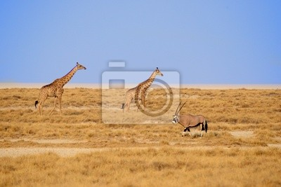 Постер Животные Giraffa 11, 30x20 см, на бумагеЖирафы<br>Постер на холсте или бумаге. Любого нужного вам размера. В раме или без. Подвес в комплекте. Трехслойная надежная упаковка. Доставим в любую точку России. Вам осталось только повесить картину на стену!<br>