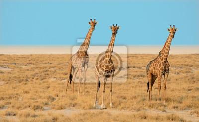 Giraffa 9, 33x20 см, на бумагеЖирафы<br>Постер на холсте или бумаге. Любого нужного вам размера. В раме или без. Подвес в комплекте. Трехслойная надежная упаковка. Доставим в любую точку России. Вам осталось только повесить картину на стену!<br>
